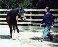 Equine psychology and training - Herdword