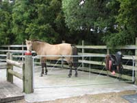 Herdword at the NZ Centre of Equine Psychology and Behaviour