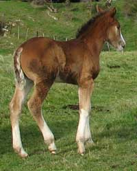 Stationbred foal by WildSide Trilby